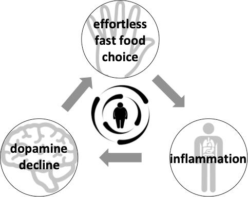 cognition neuroscientist obesity